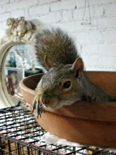 Attractive Squirrel In A Clay Pot Amazing Design