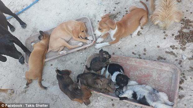 Θεόκλητος Προεστάκης: O Κρητικός οδοντίατρος που φροντίζει 200 αδέσποτα σκυλιά, τα οποία βρίσκει σχεδόν ετοιμοθάνατα! (photo