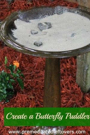 How to Create a Butterfly Puddler - Make  a butterfly puddler with this tutorial to help attract butterflies to your yard.