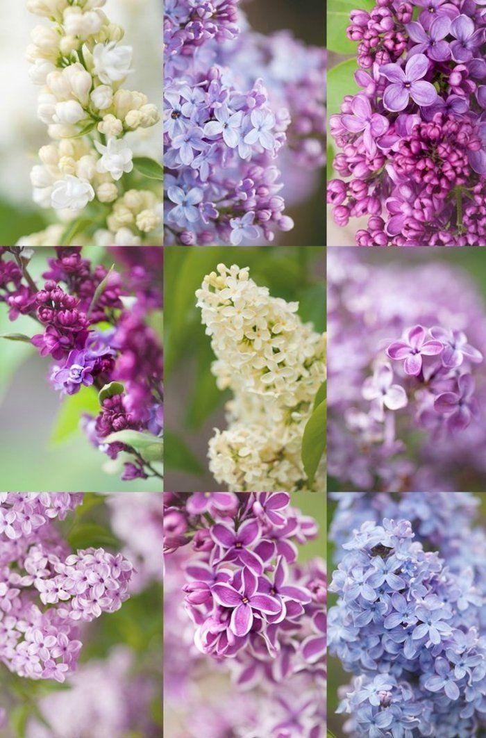 Flieder Schneiden Flider Vermehren Blumenideen Blumenideen Diygardenflowerpots Flider In 2020 Schone Blumen Flieder Schneiden Flieder