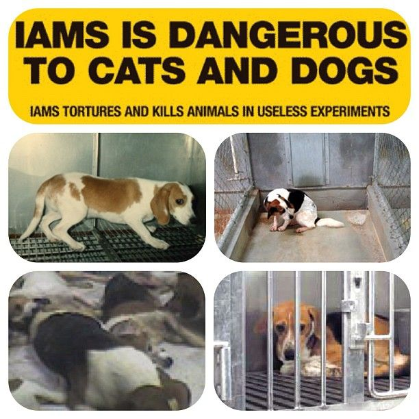 """Iams and Eukanuba TEST on animals (vivisection). Dogs are abused, neglected, kept in cramped, filthy cages. They're DEBARKED (researchers find their cries for help so annoying that they remove their vocal cords). The actual testing is mostly comprised of CUTTING chunks of their muscles out, poorly stitched back together. The parent company is Procter & Gamble, probably one of the most EVIL brand empires when it comes to animal testing. (source: vegansofig). Boycott Procter & Gamble!"""