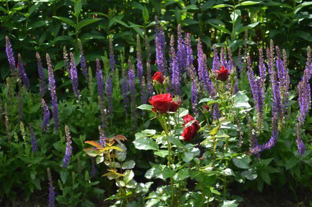 Kleuren combineren in de tuin.