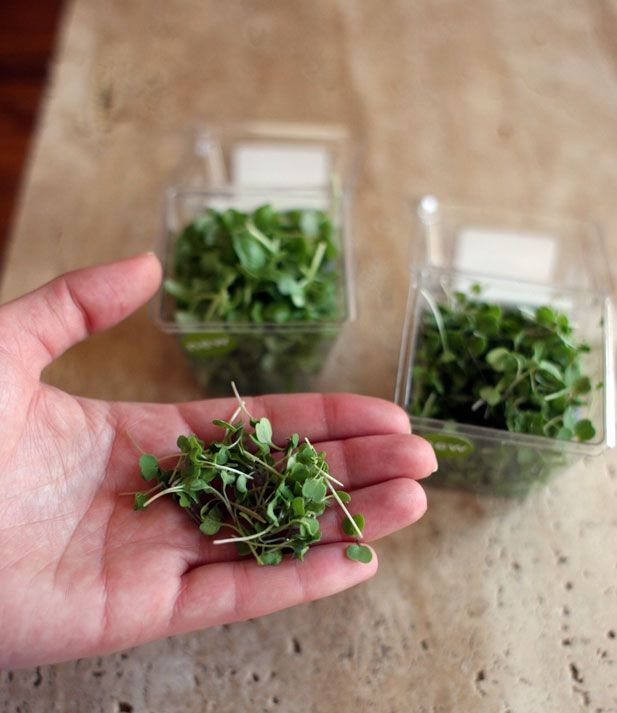 17 best images about growing microgreens on pinterest for Best growing medium for microgreens