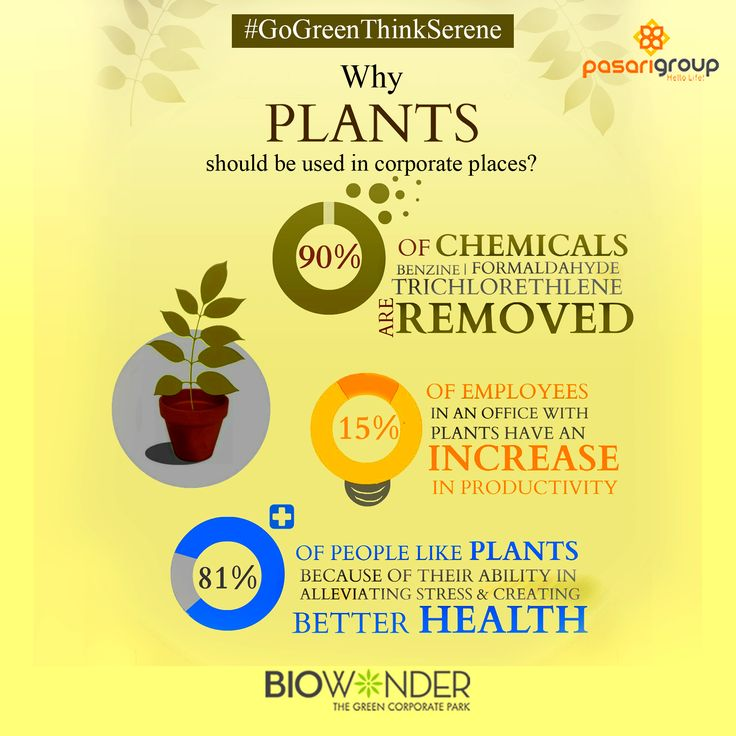 Indoor plants are certainly some of the best decorative items for offices. They remove harmful toxins from the air and are even known to improve the health of employees and also their productivity. That's why the Biophilic workplaces of Biowonder will be adorned with a wide range of green plants. #Biowonder #Biophilic #SickBuildingSyndrome #Kolkata #Healthy #FreshAir #Light #Work #Employee #Nature