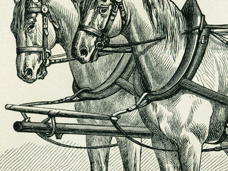 Detail kresby Postroje na koně, kresba z konce 19. století.
