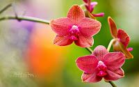 Nice Orchid Flowers images photos