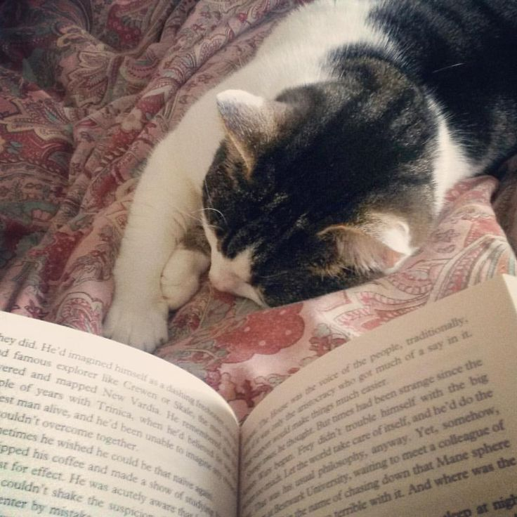 Bedtime stories... book, cat and coziness