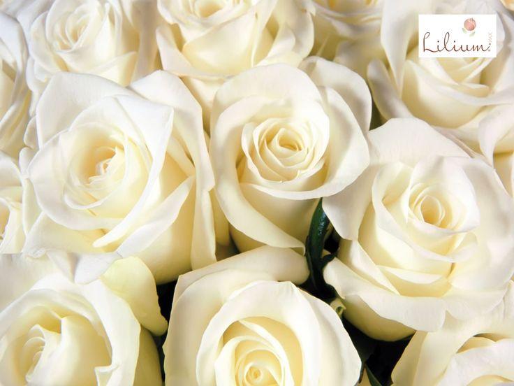 M s de 25 ideas incre bles sobre significado de rosas - Significado rosas blancas ...