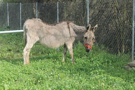 New donkey Aliki
