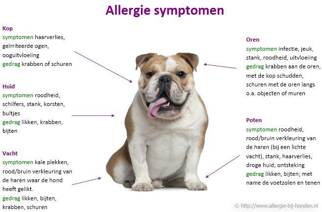 voedselallergie honden - Google zoeken