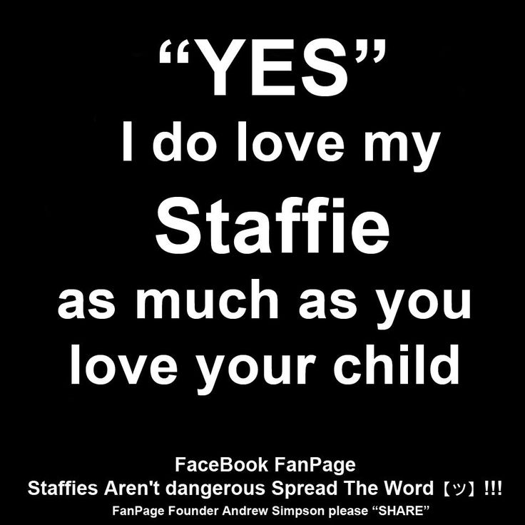 In my case,I love my staffie like another child!