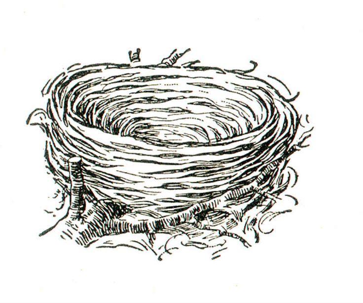 bird nest Coloring Book Pinterest