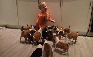 16 kutyakölyök egy fedél alatt