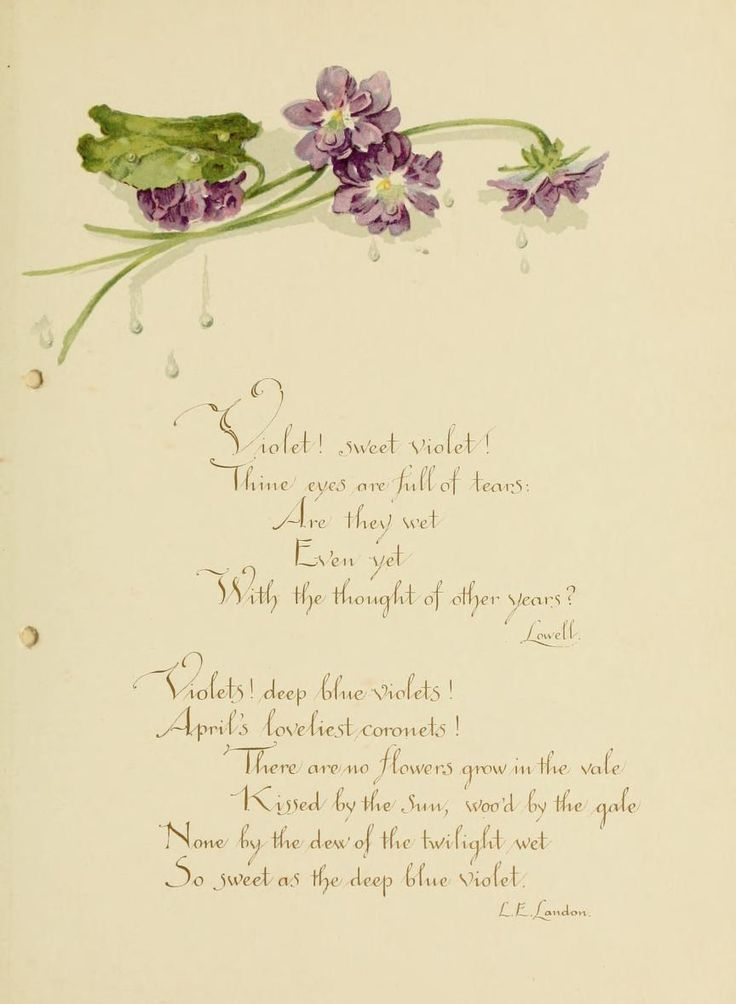 """heaveninawildflower: """"Victorian Violets. Poetry and violets. 'Deep Blue Violets' by Katherine L. Connor. Published by L. Prang & Co. Boston...."""