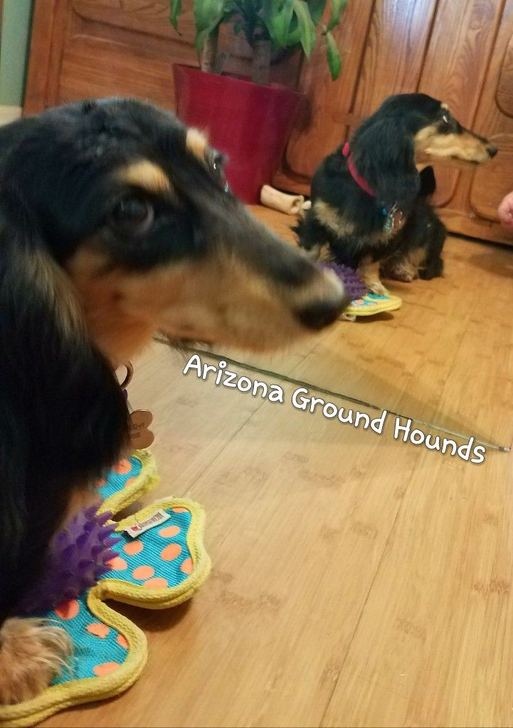 Pin On Weiner Dogs