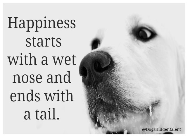 Quotes About Dogs 65 Best Dogs Quotes Images On Pinterest  Dog Quotes Doggies And Dogs