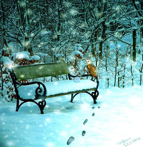 Waiting: Animal Photography, Parks Benches, Scenery Things, Christmas Cheer, Wait Benches, Benches S, Beautiful Scenery, Reliqu Memoirs, Winter Beautiful
