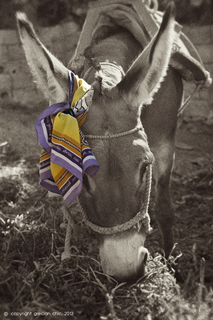 """Grecian Provence"" silk scarf  by grecian chic, elena zournatzi"