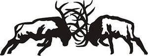 Fighting elk