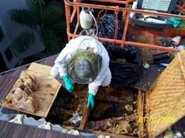 Bee Removal Stuart Florida is a process of removing bee in Florida. It is not just simply removing the bees. There are certain things that are needed and must be done so that removing would become successful. Bee removal is the usual thing that is done in order to get rid of the bees.Visit our site http://plus.google.com/102611912165336226556/about for more information on Bee Removal Stuart Florida