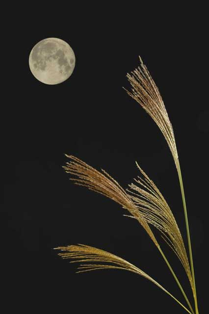 """Tsukimi お月見 - Tsukimi means """"moon-gazing"""". It's a Japanese custom to enjoy and appreciate the beautiful mid-September full moon, by offering Dango (dumpling) with pampas grass to the moon."""