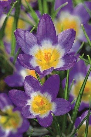 Les 3128 meilleures images propos de flowers sur for Aubade jardin bucolique