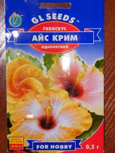 Гибискус из семян - Цветочный форум