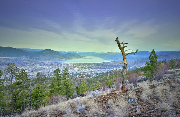 View of Okanagan Lake in the distance from Wiltse Mountain in Penticton, BC Canada