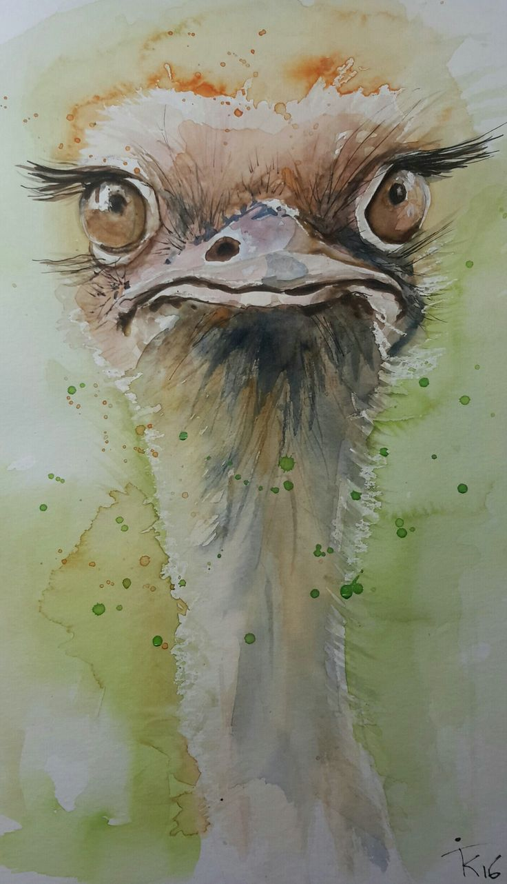 aquarel struisvogel