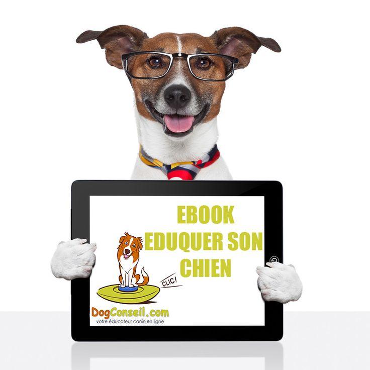 programme pour éduquer son chien