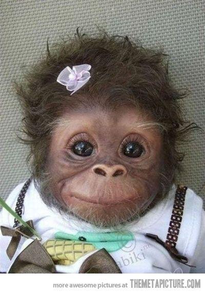 Too stinkin cute!