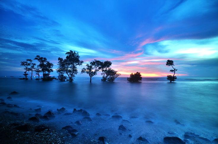 "Purchase this product now and earn 40 Points!Trees on the shore seering called ""Pohon Galau"" by the community and lovers of photography Pixels: 4928x3264"