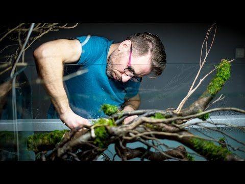 Projekt Akwarium Naturalnego - ADA /Nature Aquarium Project/ - YouTube