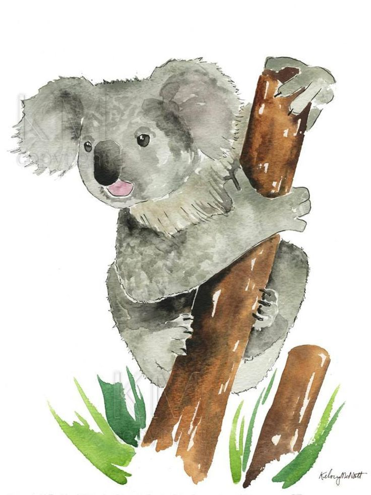 Koala Bear Print, Watercolor Painting, Outback Nursery