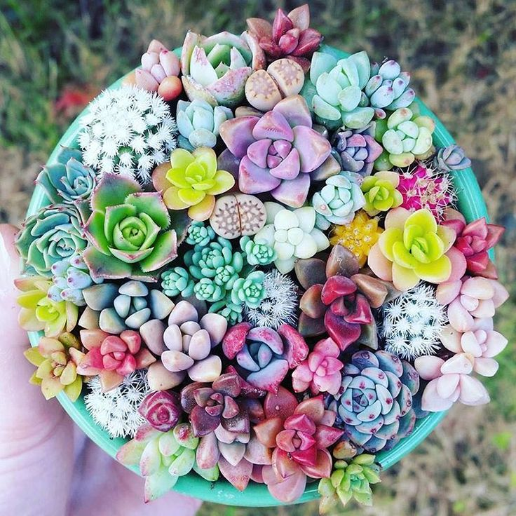 Succulents that fit in the palm of your hand are perfection #succulents #succulentlove #succulentlife #tinygardens