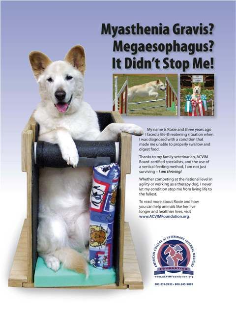 Mestinon Myasthenia Gravis Dogs