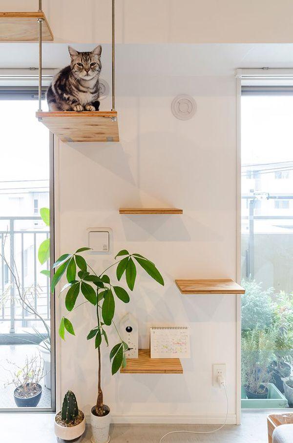 30 Modern Diy Cat Playground Ideas In Your Interior Cat Wall Furniture Cat Wall Shelves Diy Cat Shelves