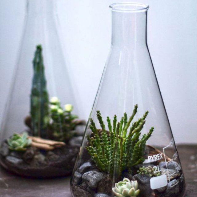 Un terrarium qui change de l'ordinaire