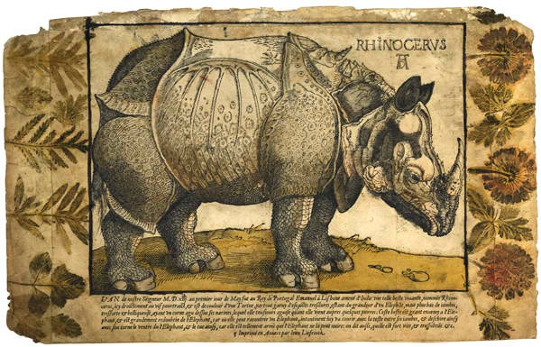 """Albrecht Durer's """"Rhinoceros"""" 16th Century  An Irish collector likely inked his flower and plant specimens and then  pressed them on the borders of this print of an Indian rhinoceros made from a woodcut created in 1515 by artist Albrecht Durer.  Durer created this illustration of a Rhinoceros from descriptions of the animal. He had never seen one before."""