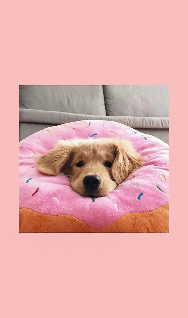 Wallpaper Goals Cute Dog Wallpaper Puppy Wallpaper Puppy Wallpaper Iphone