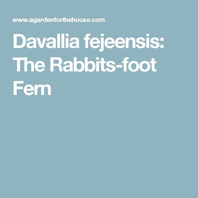 Davallia fejeensis: The Rabbits-foot Fern