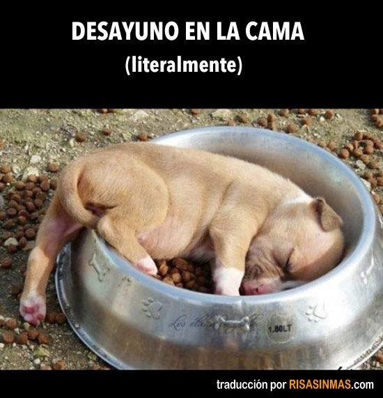 Desayuno en la cama (literalmente). repinned by www.rauschsinnig.de/sunny/sunny.html #dog