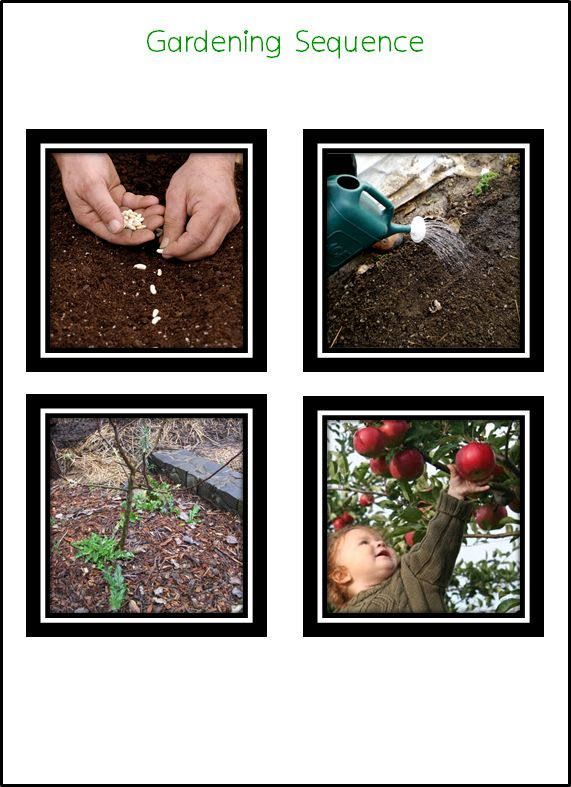 Tu B'shvat Gardening Sequencing Cards: Have each child place the cards in sequential order.