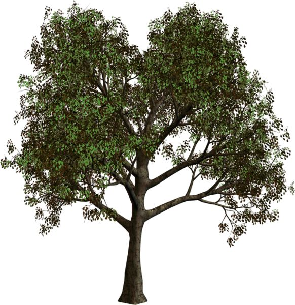 Forest Tree PNG Clipart