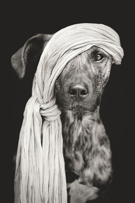 Pirate of the Baltic Sea by Elke Vogelsang || smiling here~