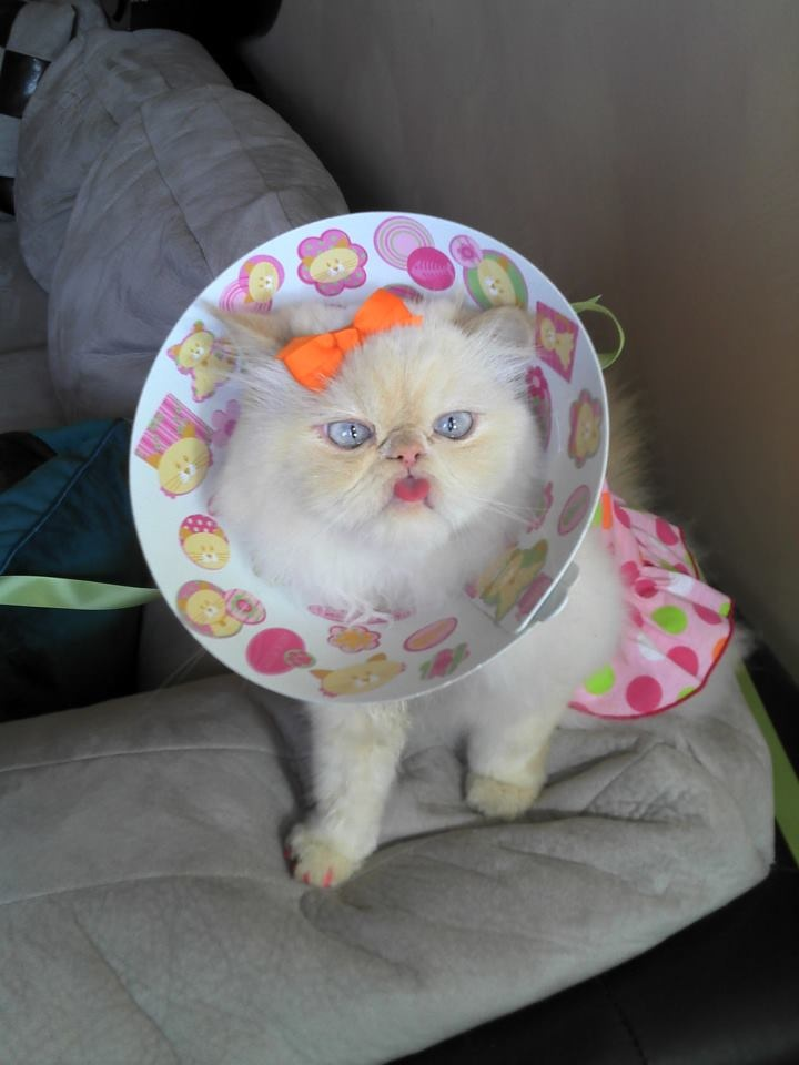 Imma going to kill you when you sleep: Cat Chuckl,  Pennies Banks, Cat Humor, Teddy Bears, Fashion Kitty, Funny Stuff, Prettier Cones, Cat Life, Kitty Hurts