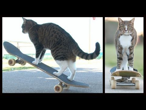 Just watch the whole video: | Skateboarding Cat Has The Best Day Ever, Is A Skateboarding Cat