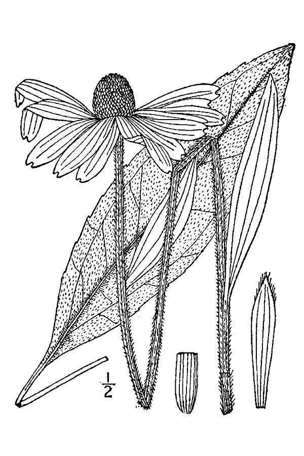 Line Art Java : Floral sketch colouring florals pinterest botanical