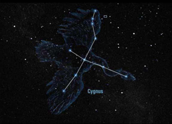Image result for cygnus constellation