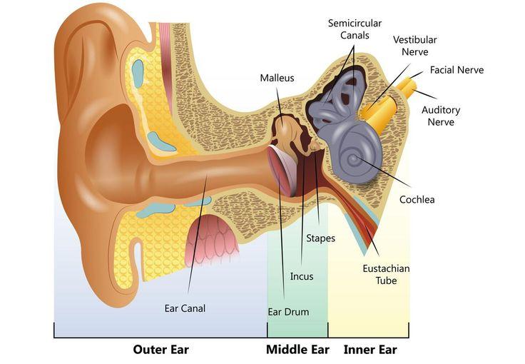 Human Ear Diagram